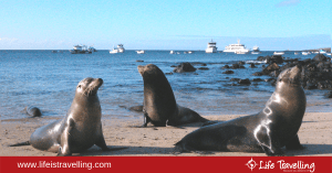 Ecuador: the best time to visit the Galapagos islands