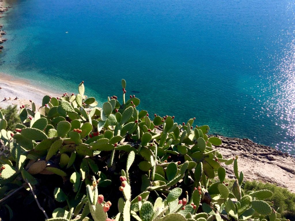 red fruits on a green prickly pear cactus with a bright blue sea in the background on the wallls of the castle in Nafplio