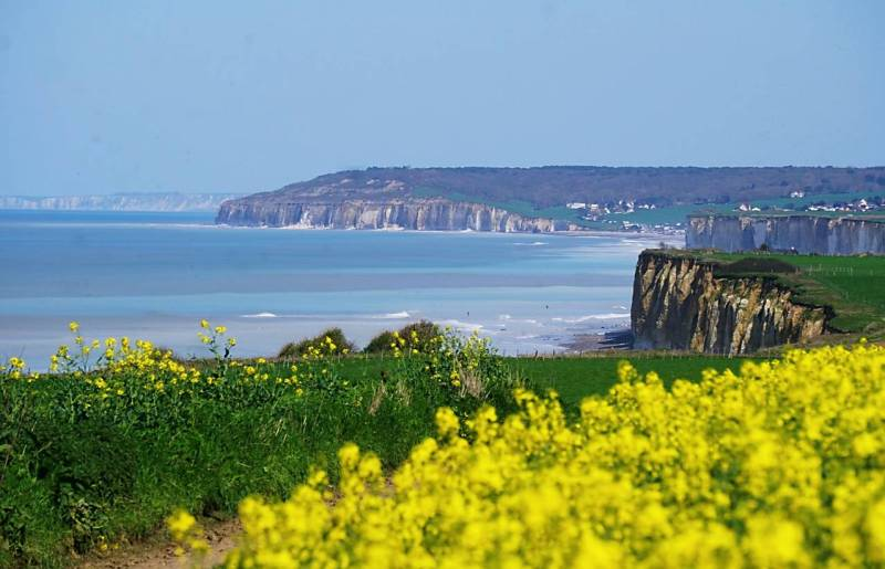 yellow flowers in the foreground, with the alabaster cliffs of Normandy in the background.