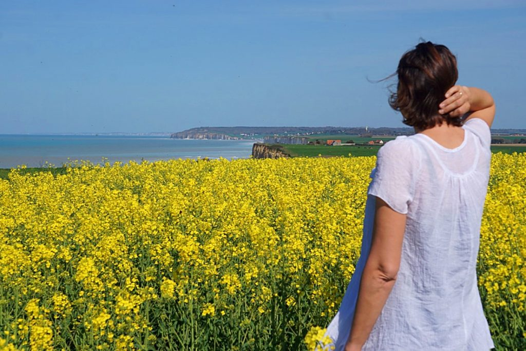 yellow flowered field with a view to distant cliffs and the sea