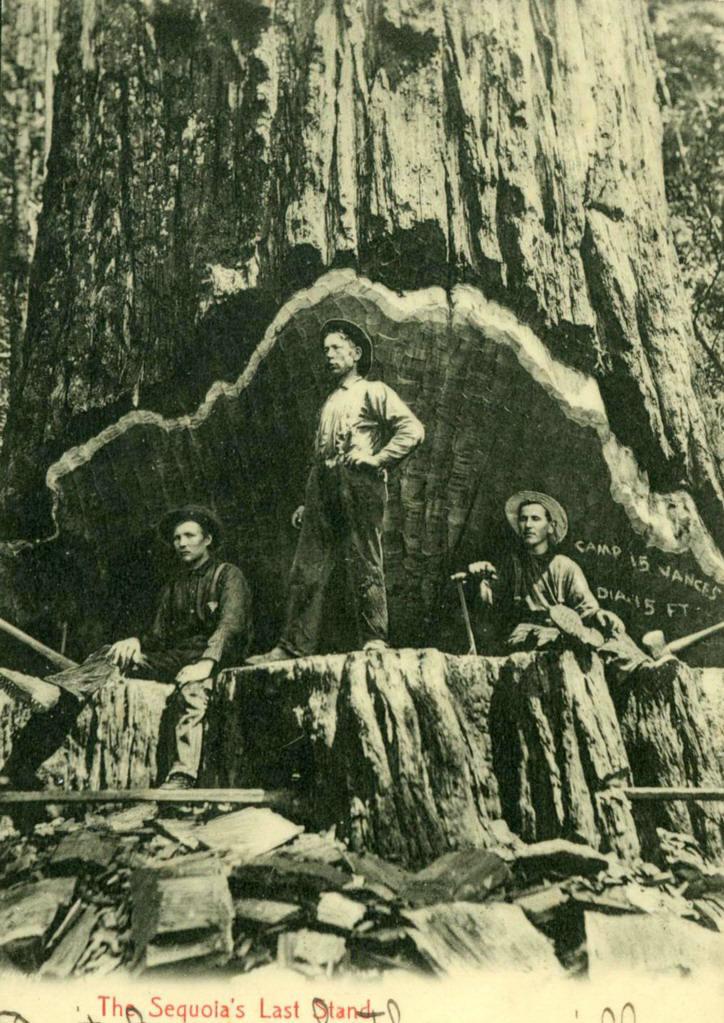 redwood-logging
