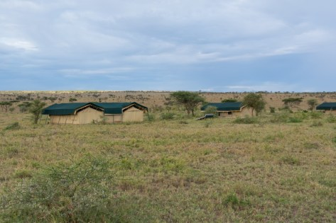 Tanzania, Serengeti (13)