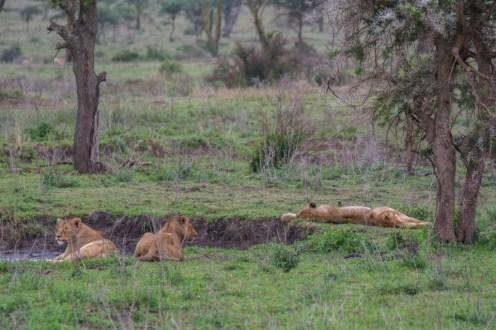 Tanzania, Serengeti (29)
