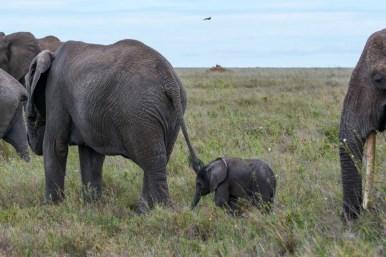 Tanzania, Serengeti (31)