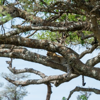Tanzania, Serengeti (42)
