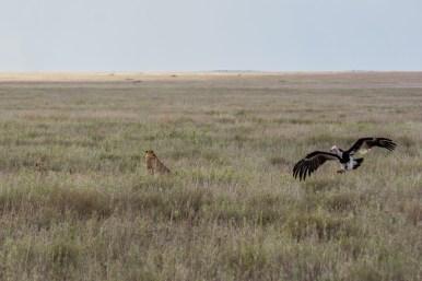 Tanzania, Serengeti (5)