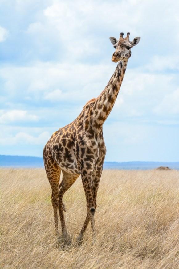 Tanzania, Serengeti (61)