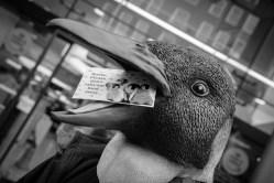 Penguin head shot