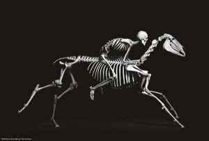 A human skeleton riding a running horse skeleton