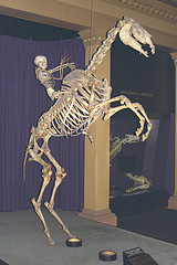 Skeletons - man riding horse