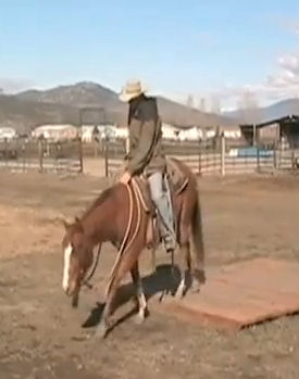 Cash, the blind Quarter horse, training under saddle at 4 years old.