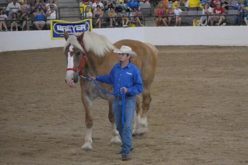 Radar, sorrel Belgian gelding is former largest horse in the world at Breyerfest 2010.
