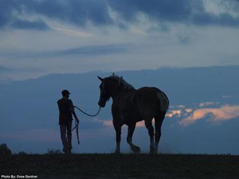 Priefert's Radar, Belgian gelding - tallest horse in world 2006 - 2009