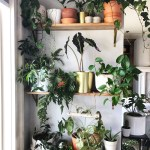 Diy Indoor Plant Wall Life Love Larson