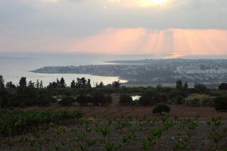 Banana Plantation in Cyprus
