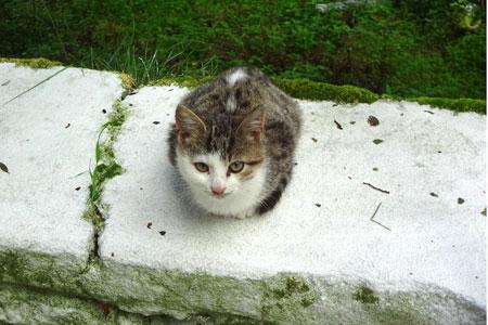The Cats of Corfu - Exploring Mount Pantokrator