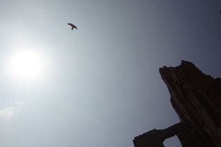 The Falconry Show at Corfe Castle