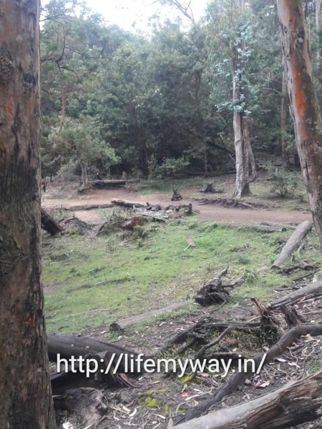deforestation of natural surrounding.