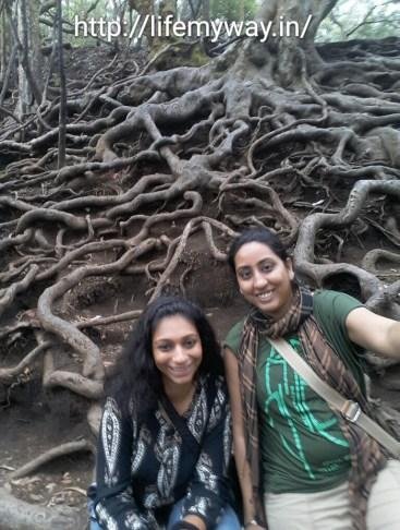 At Guna Caves,tree roots