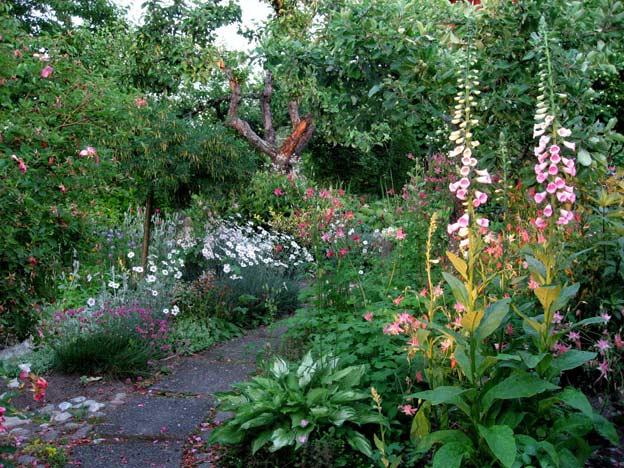 июнь в саду садовые цветы