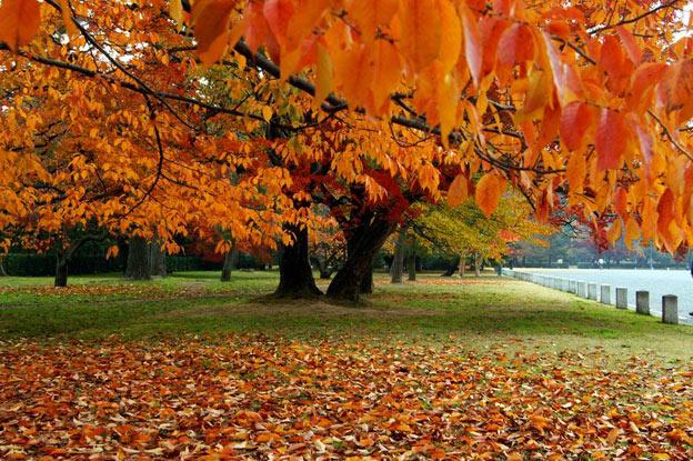 Киото ботанический сад японский сад осень красные деревья