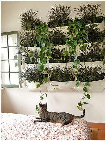 как вырастить зимний сад в доме квартире оригинальное размещение растений
