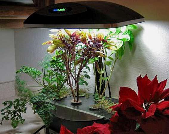 как вырастить зимний сад в доме квартире свет для комнатных растений