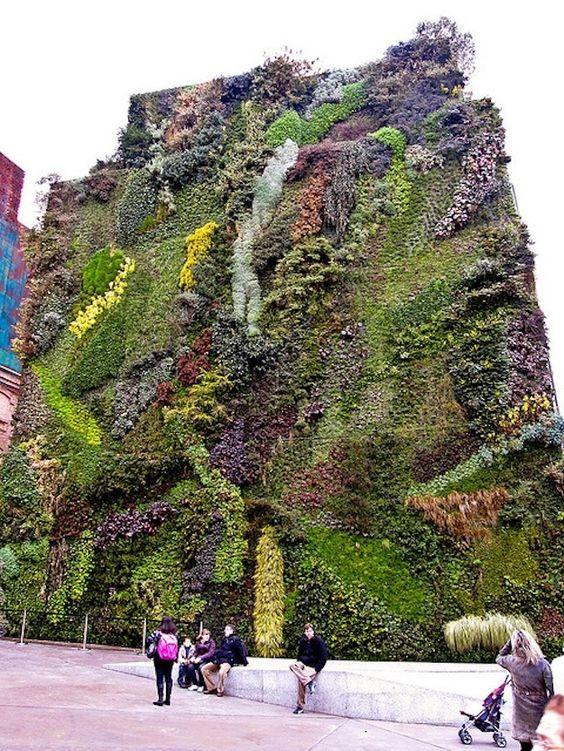 Вертикальное озеленение стены дома
