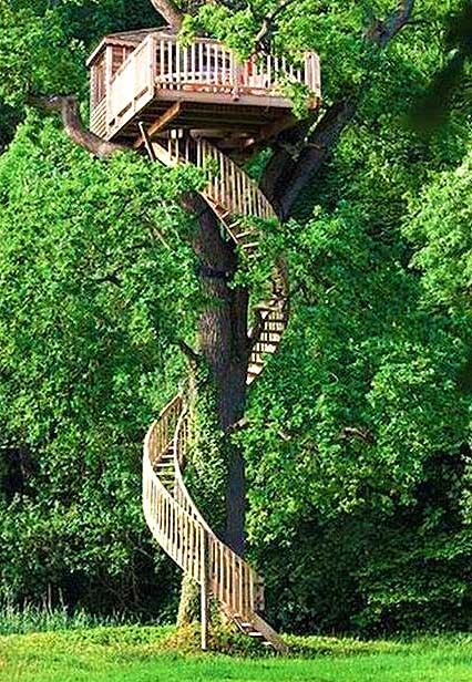 Домик на высоком дереве