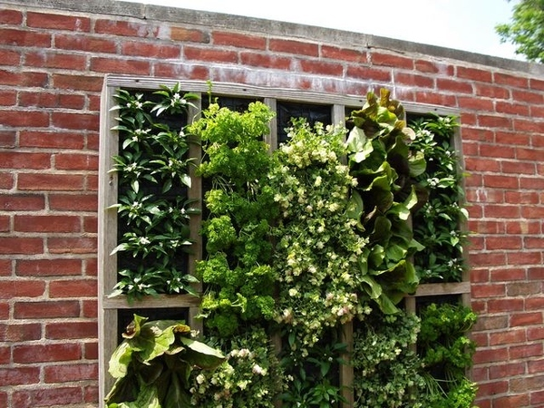 Вертикальное озеленение стен