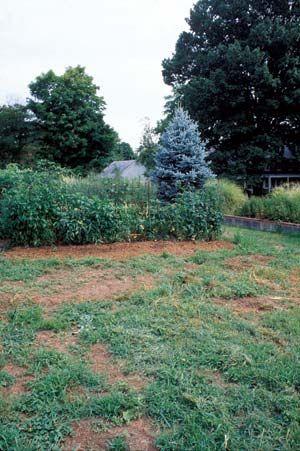 Разработка целины на огороде
