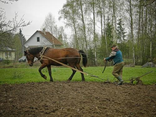 Как проращивать картошку