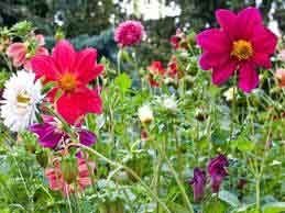 Какие цветы сажают в мае