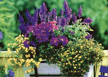 Ампельные цветы и растения в озеленении балконов и террас 5