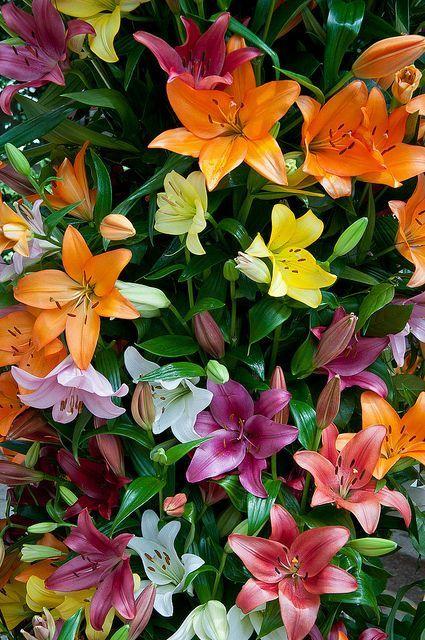 Выращивание и подкормка рассады цветов