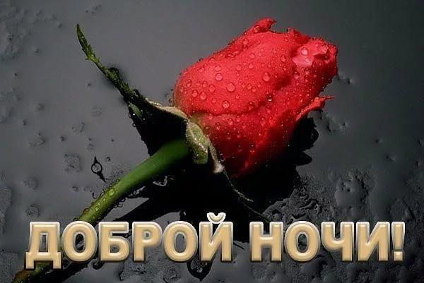 Текстом, доброй ночи картинки с надписями красивые с цветами и пожеланиями