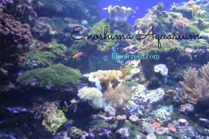 Fish at Enoshima Aquarium