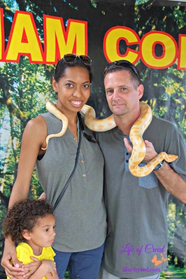 python, thailand, phuket, cobra show