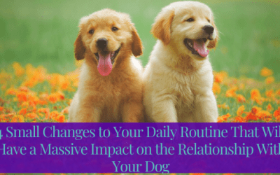 4 Small Changes to Your Daily Routine That Will Have a Massive Impact on the Relationship With Your Dog