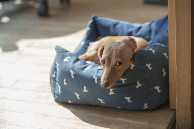 While purchasing waterproof beds for your pet buddy, you should always keep his level of comfort in mind.