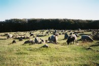 Viking cemetery