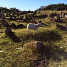 The lamb living atop the bodies of vikings...