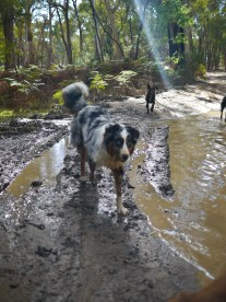 Disgraceful mud-dog.