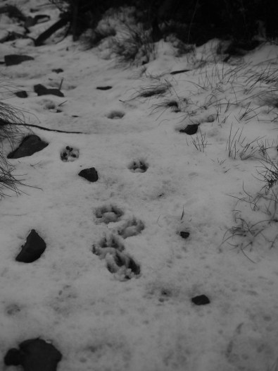 Artsy B&W footprints photo