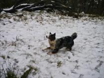 THROW THE SNOWBALL!!!!