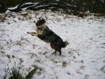 I caught the snowball!!!