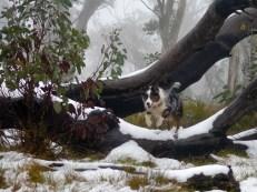 Snow log leaping again!