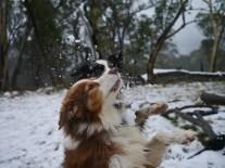 Caught a snowbal!