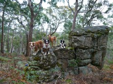 The mini-pack on rocks