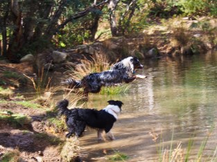 Fetching a stick in water again! Part 1